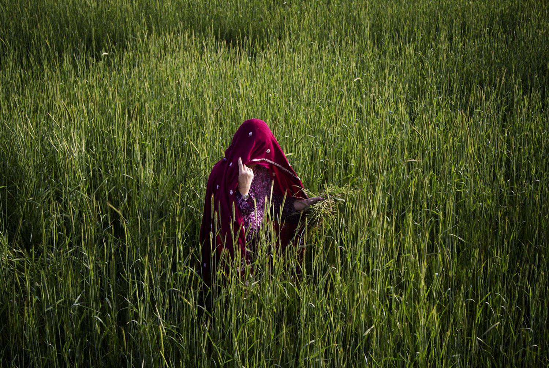 Афганская женщина в поле