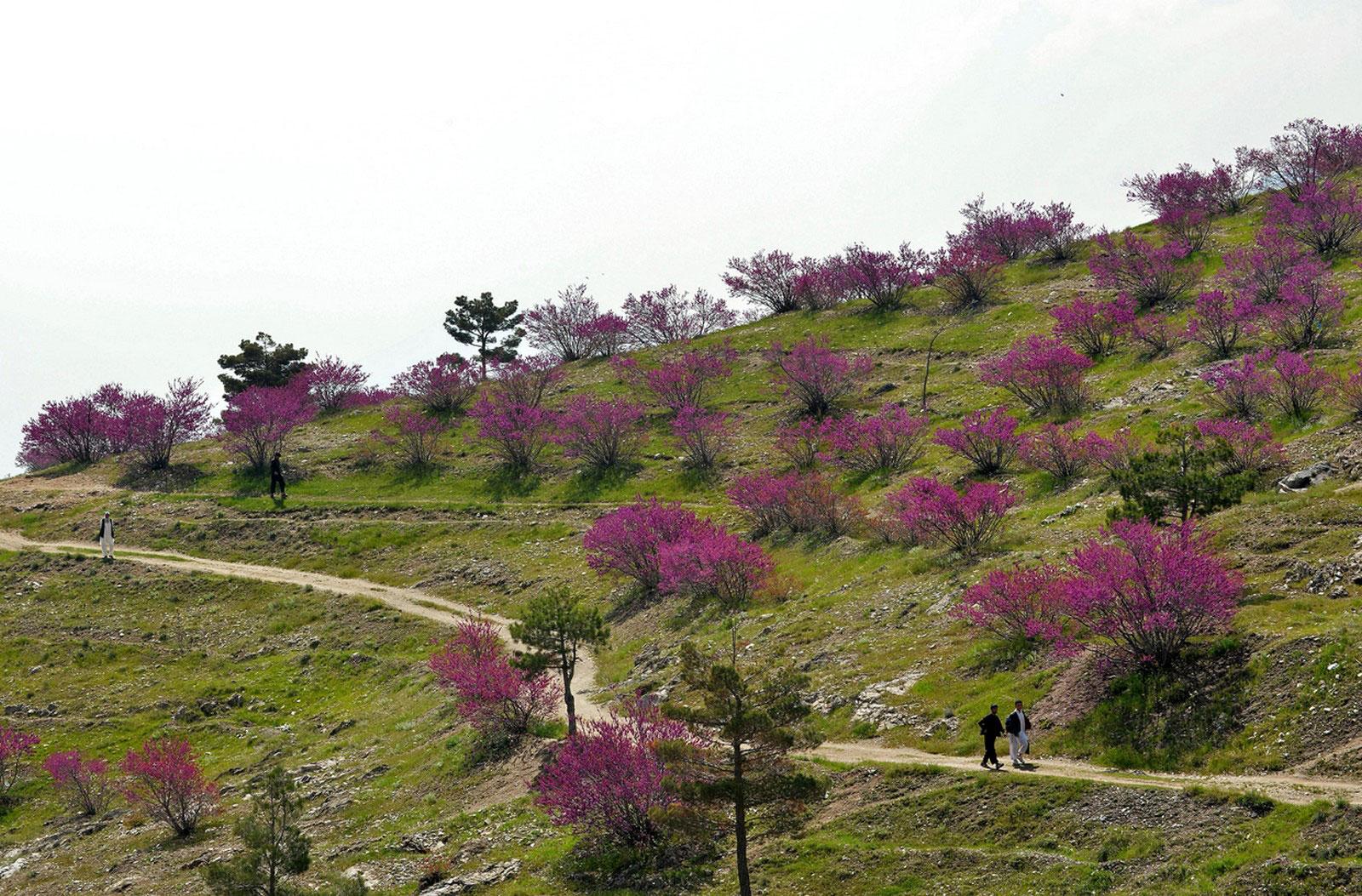 Люди проходят мимо цветущих деревьев