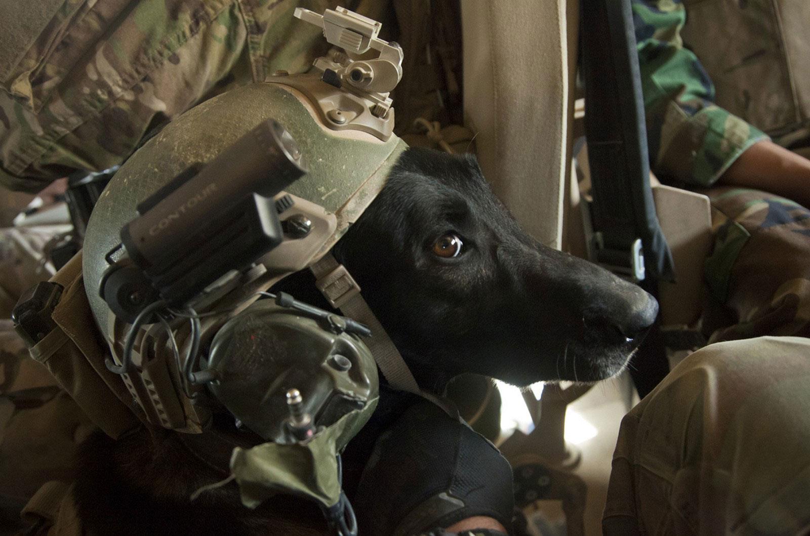 собака морской пехоты США