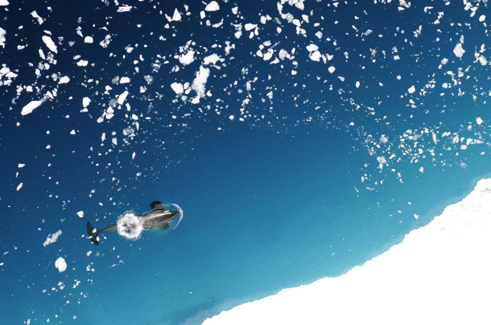 касатка в западной Антарктиде, фото
