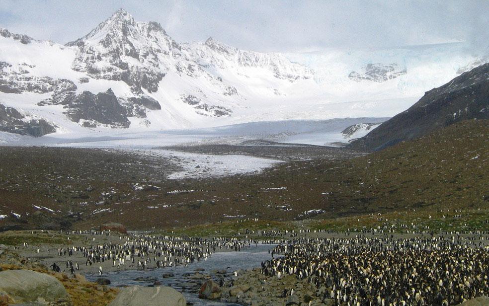 Остров Южная Георгия, Антарктида, фото