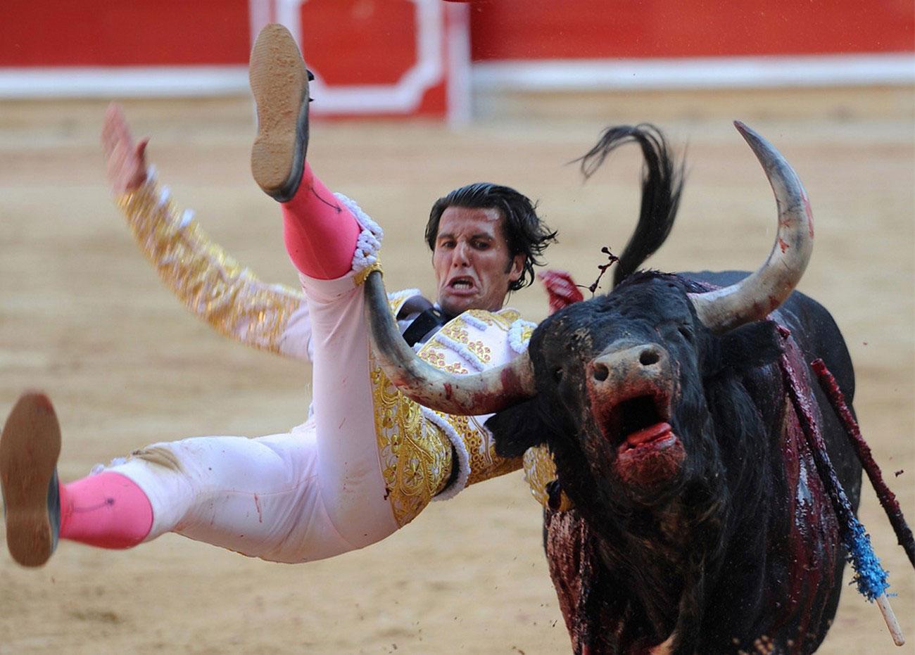 бык в крови во время боя в Памплоне