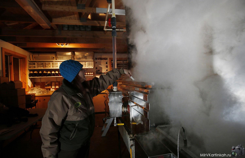 приготовление кленового сиропа