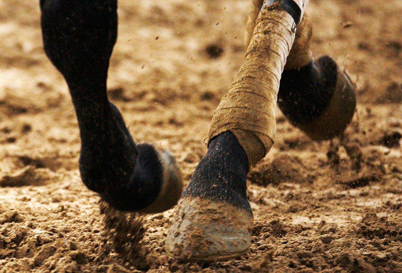Лошадь скачет по грязи, ипподром