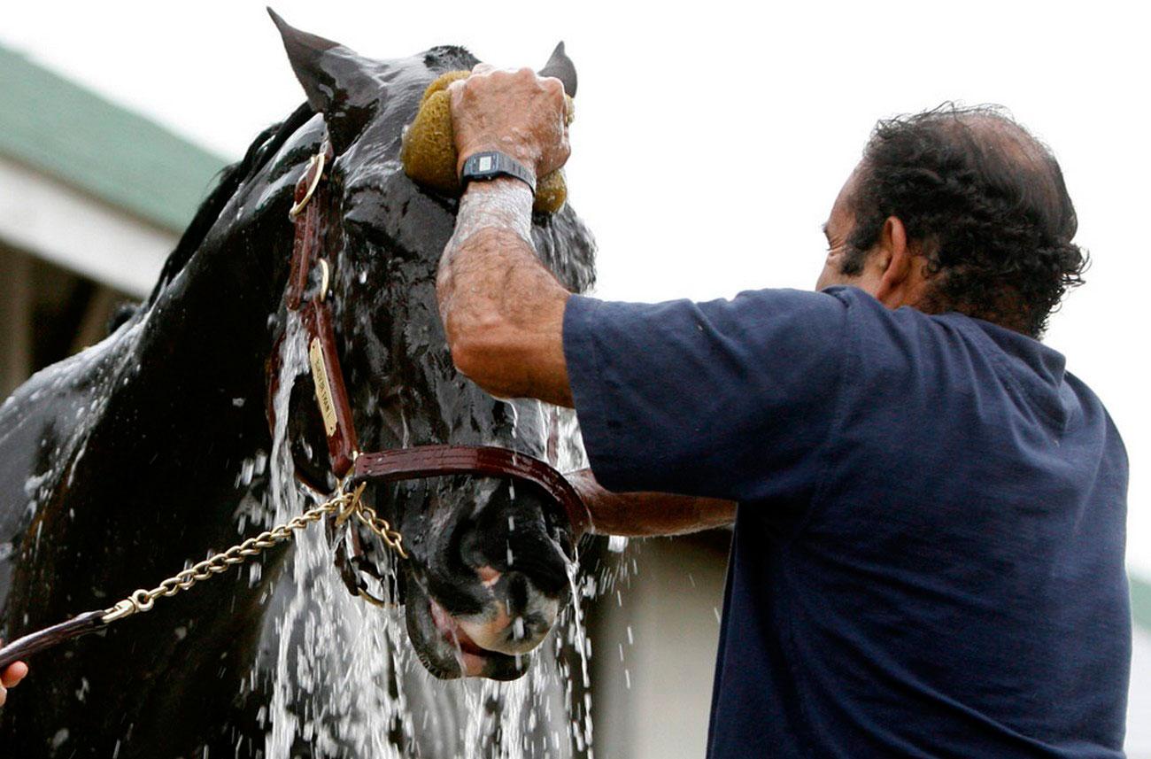 Лошадь моют на ипподроме