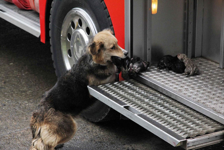 собака с щенками, фото