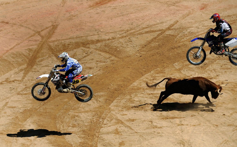 Мотоциклисты прыгают через быка