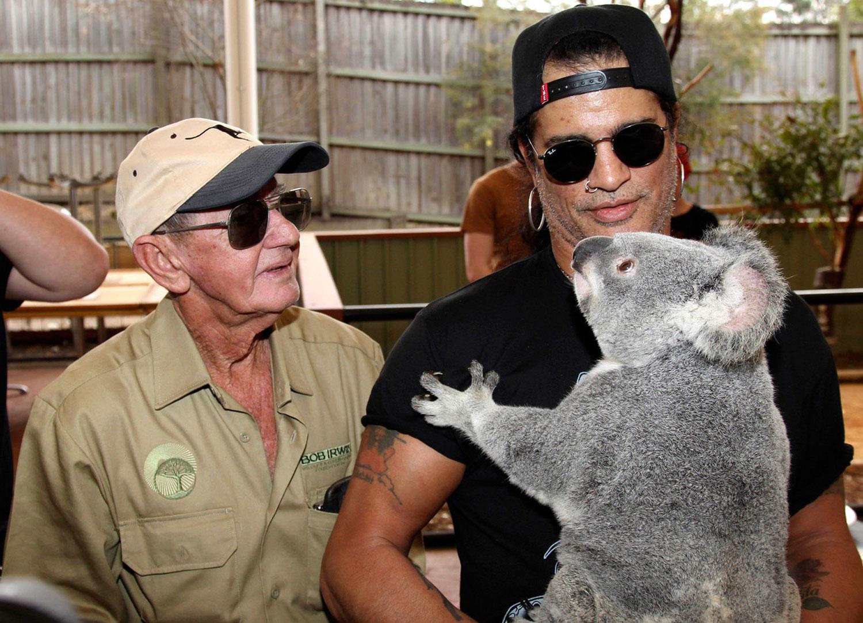 дикое животное коала, фото