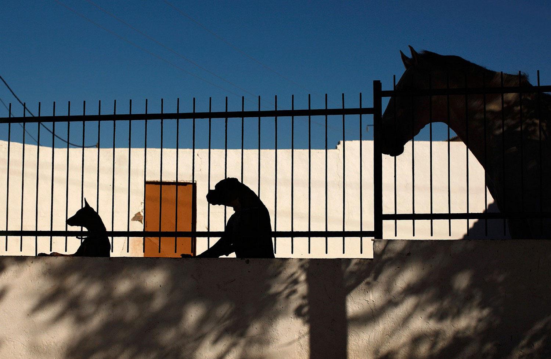 лошадь и собаки позируют для фото