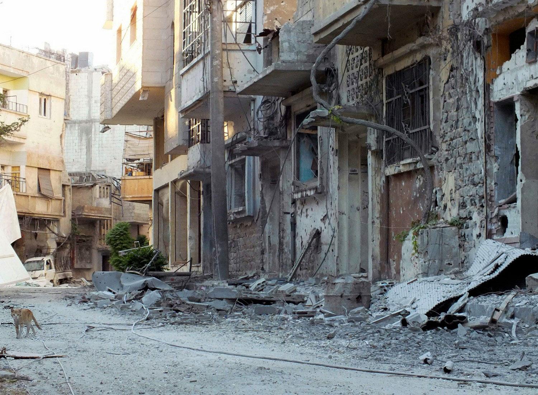кошка на руинах Сирии, фото
