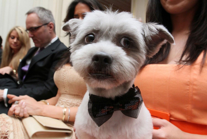 Собачья свадьба, фото