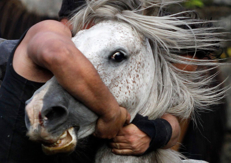 дикие лошади, фото