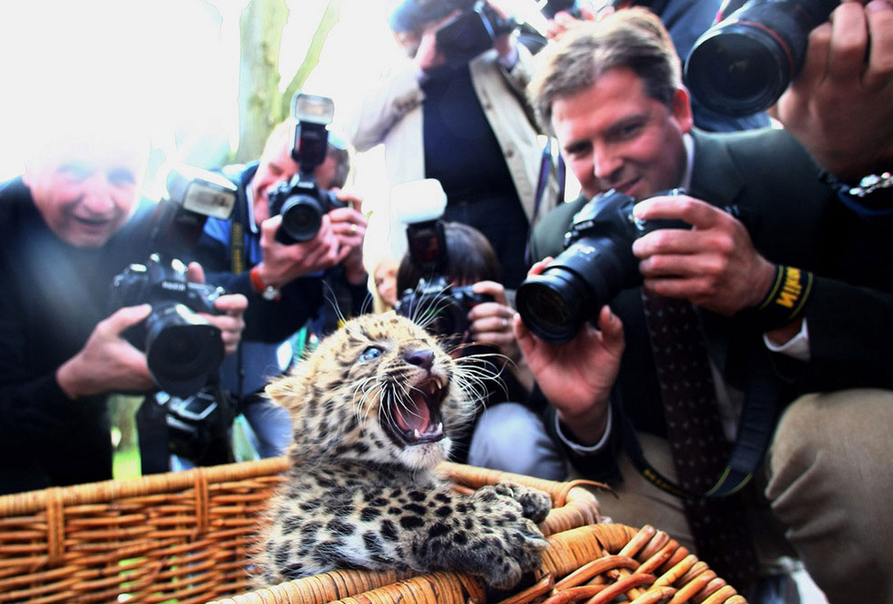Детеныш леопарда, фото