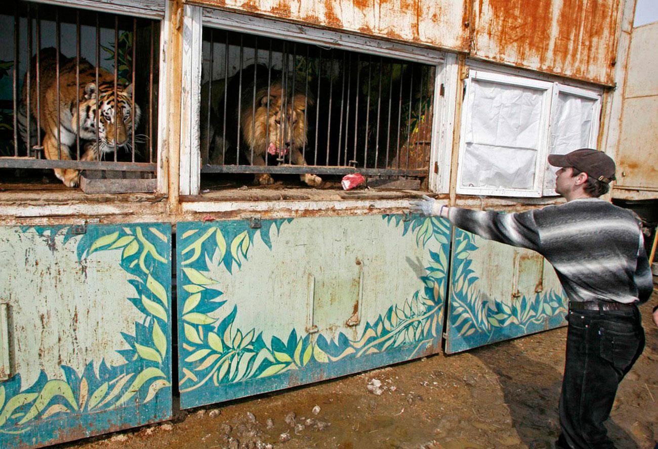 хищники в передвижном зоопарке, фото