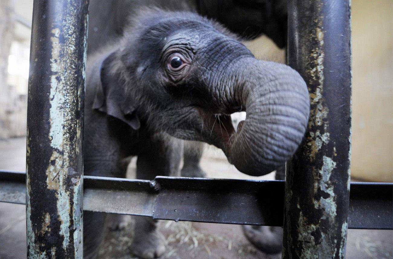 слоненок в берлинском зоопарке, фото