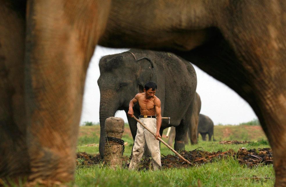суматранские слоны в национальном парке Вай-Камбас, фото из Индонезии