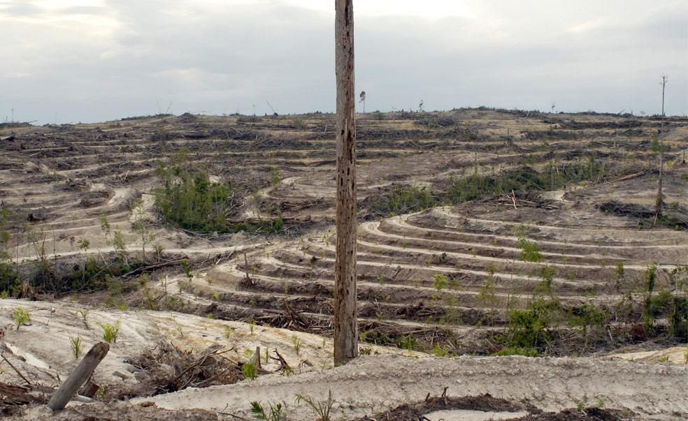 Остров Борнео, фото из Индонезии