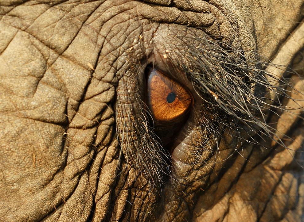 азиатские слоны, фото из Индонезии