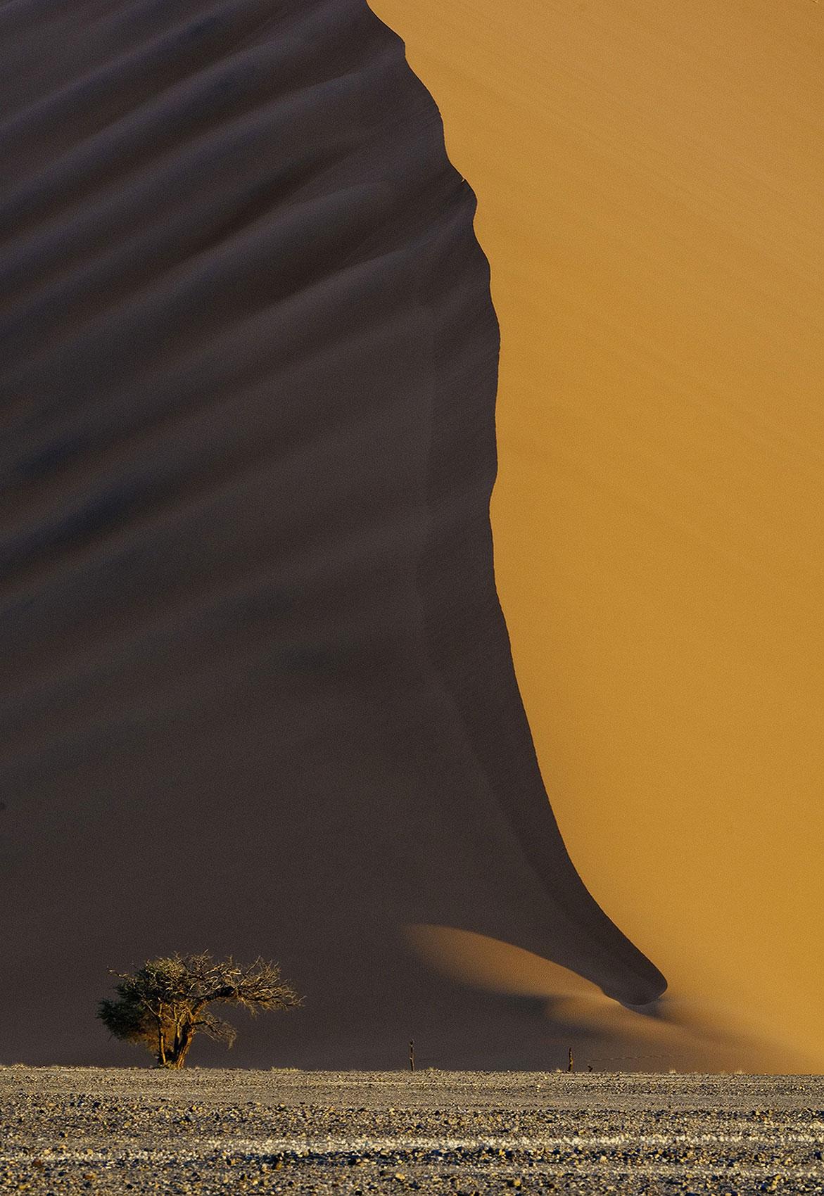 акация в дюнах