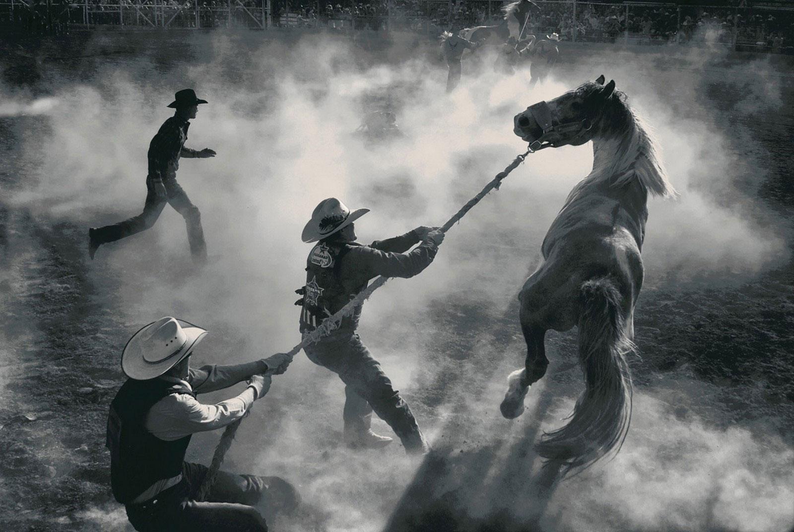 распродажа лошадей, фото