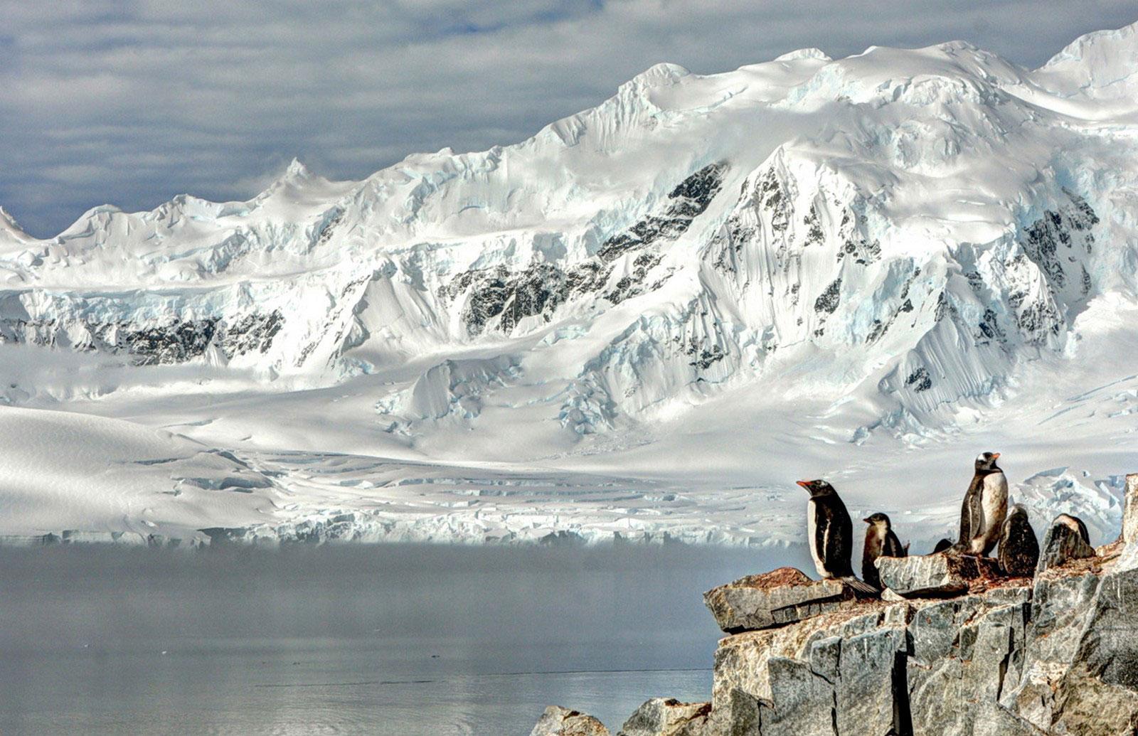 пингвины, фото