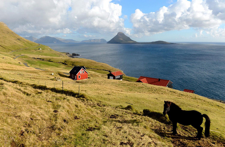 конь возле села Вельбастар, фото с фарерских островов