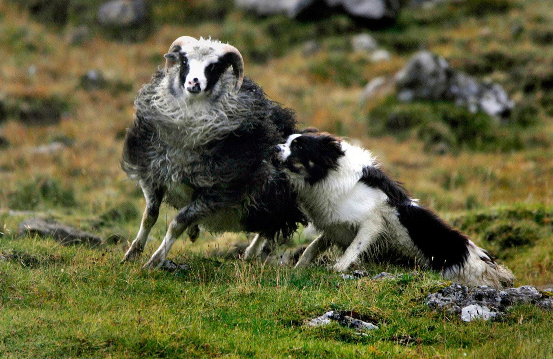 недалеко от деревни Саксун, фото с фарерских островов