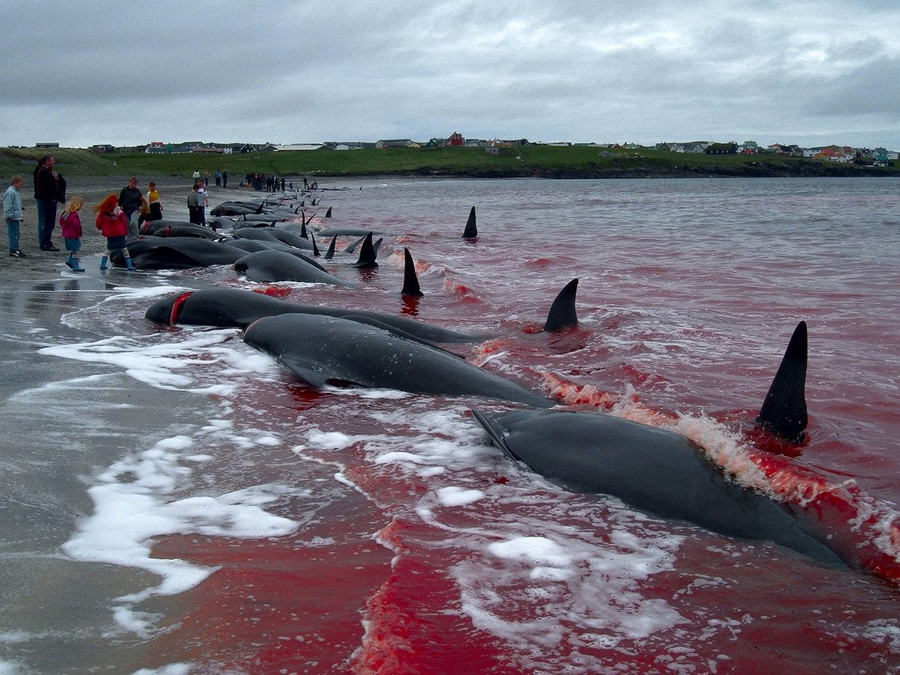 дельфины с фарерских островов