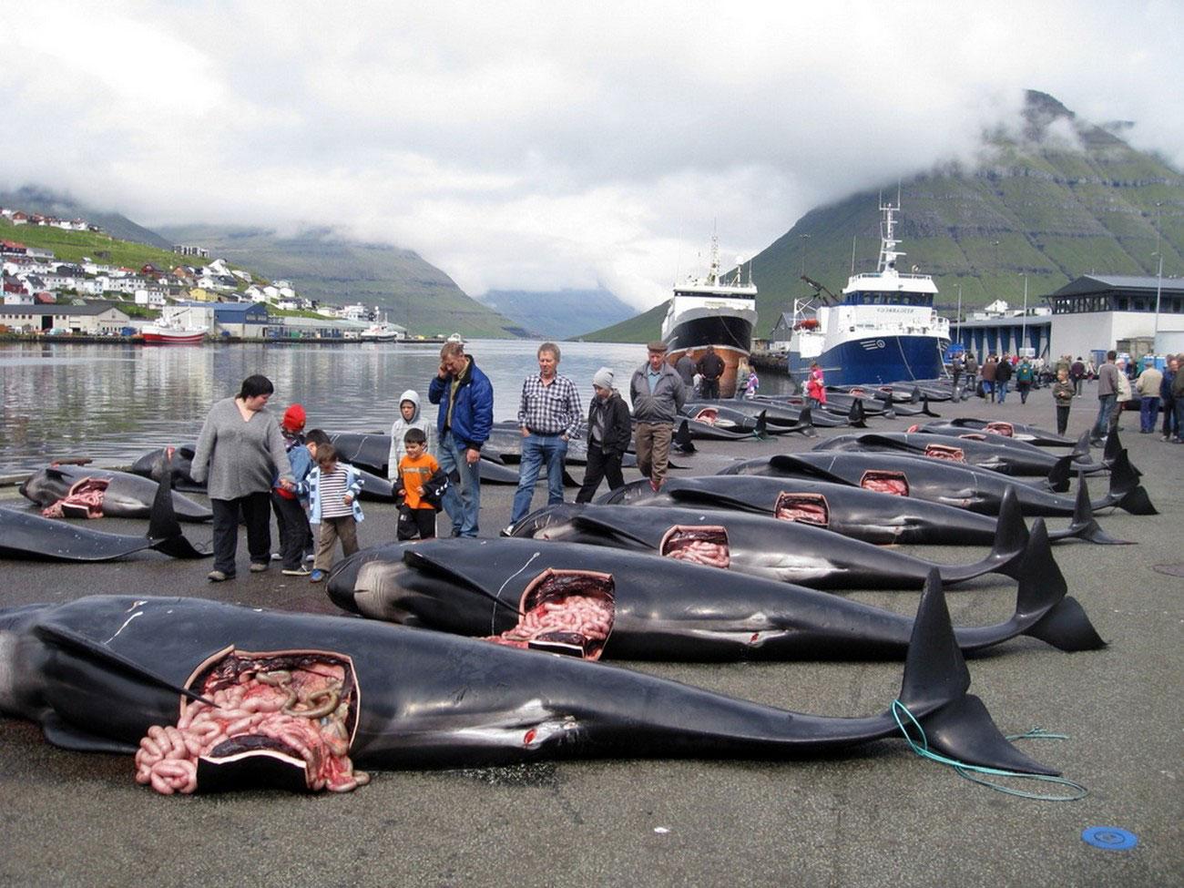 убиство животных на архипелаге