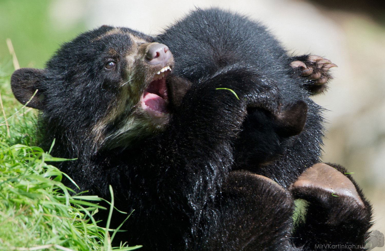 Игры медвежат