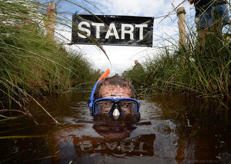 плавание в болоте