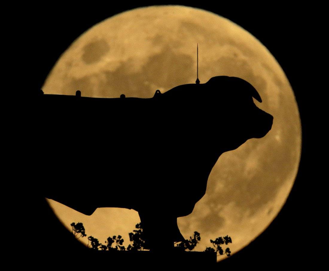 Статуя быка, фото