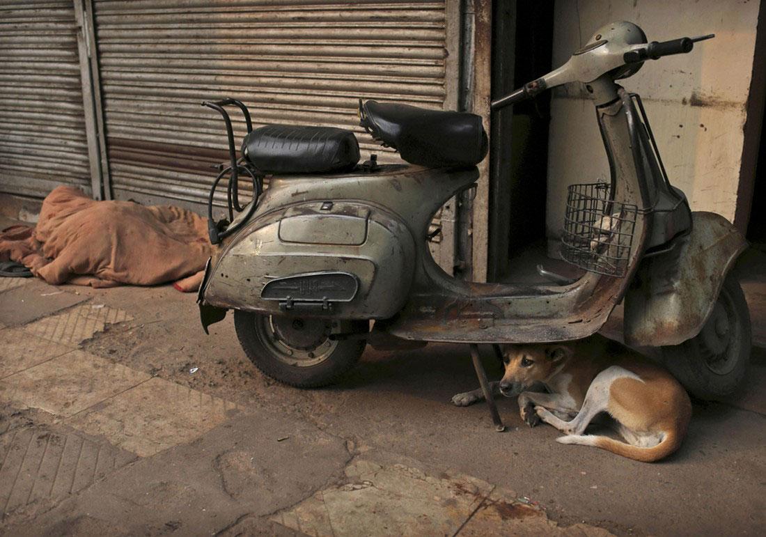 собака под скутером, фото