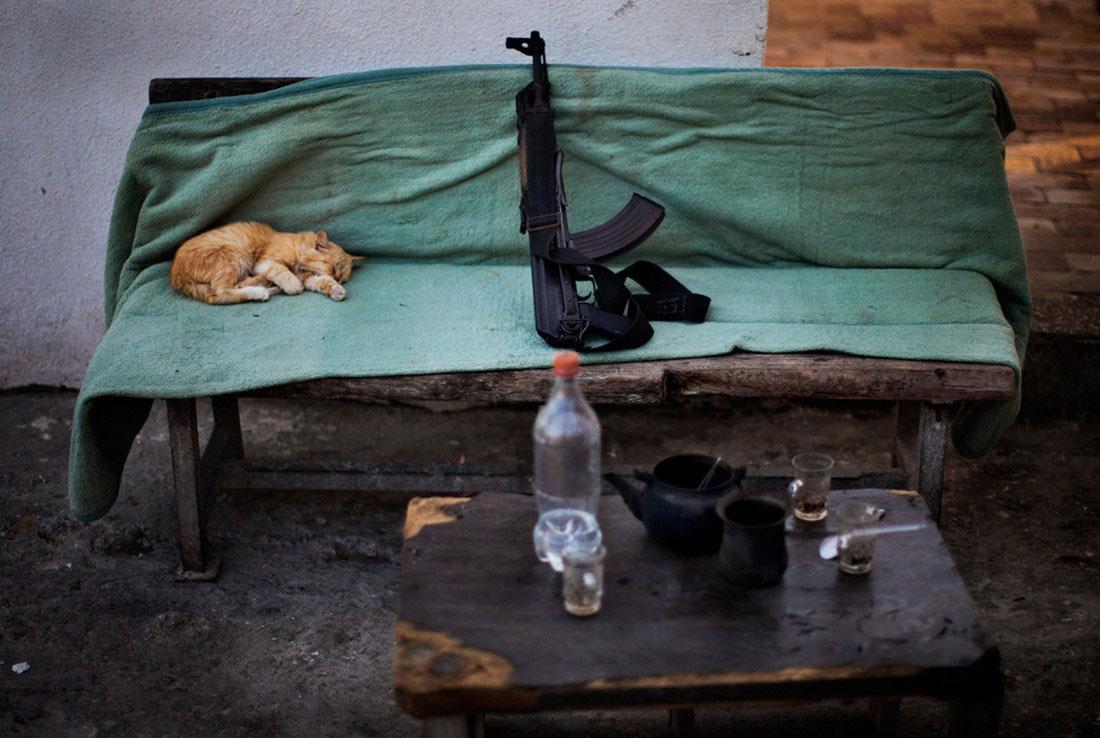 кошка на скамейке, фото