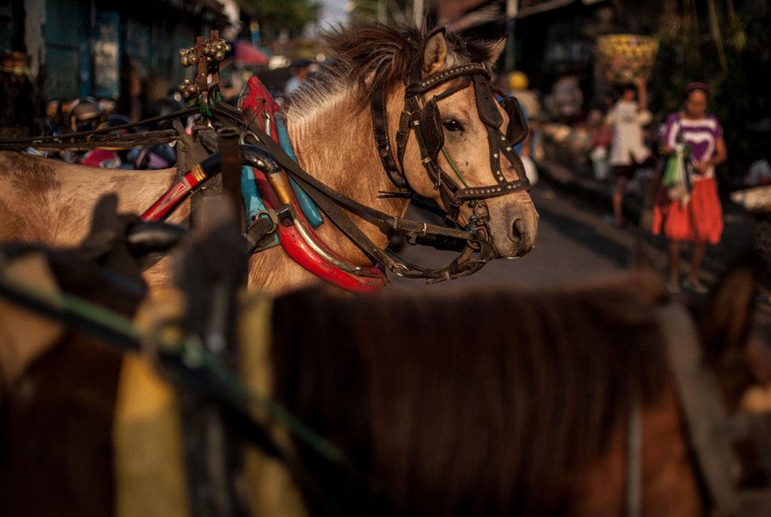 Лошади в Индонезии, фото