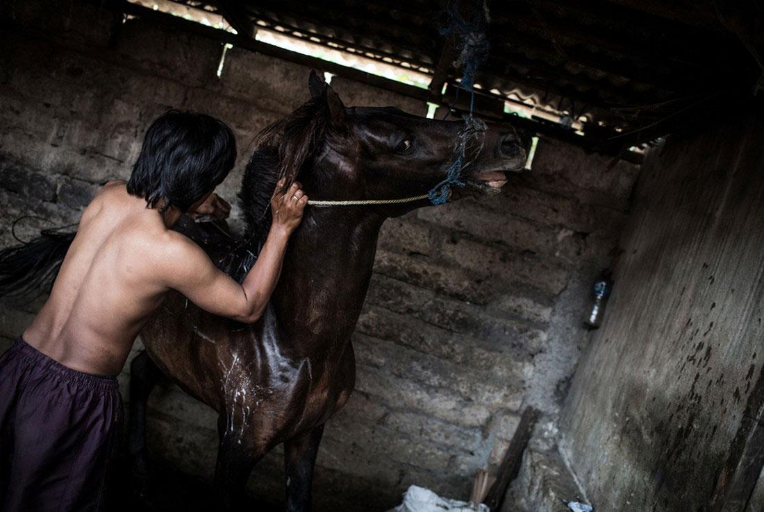 мужчина моет лошадь, фото