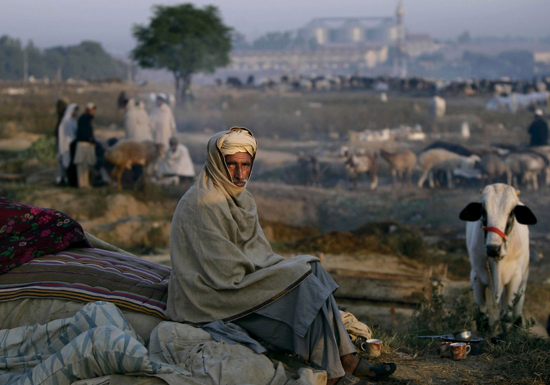 на придорожном рынке домашнего скота, фото