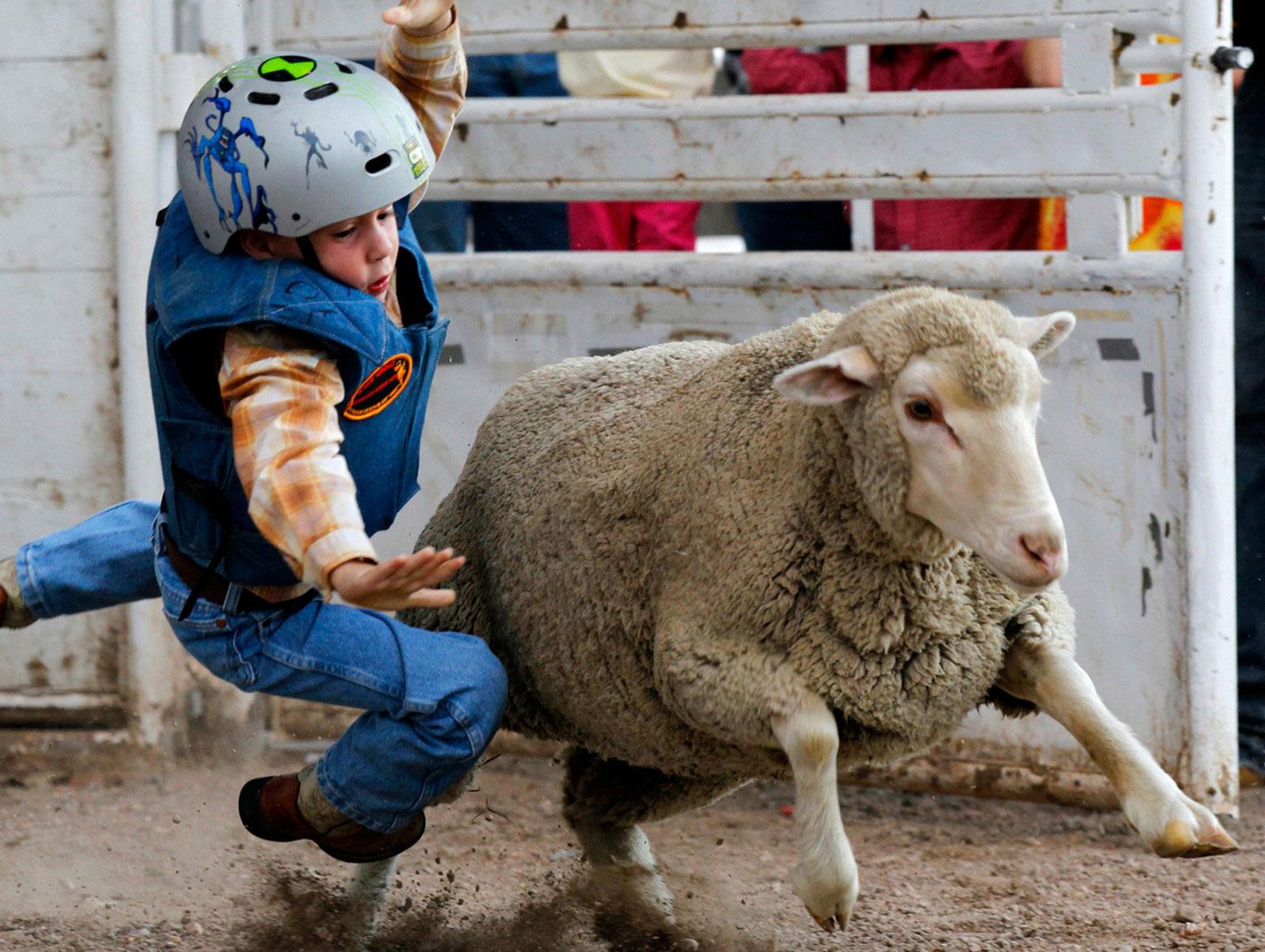 ребенок и овца