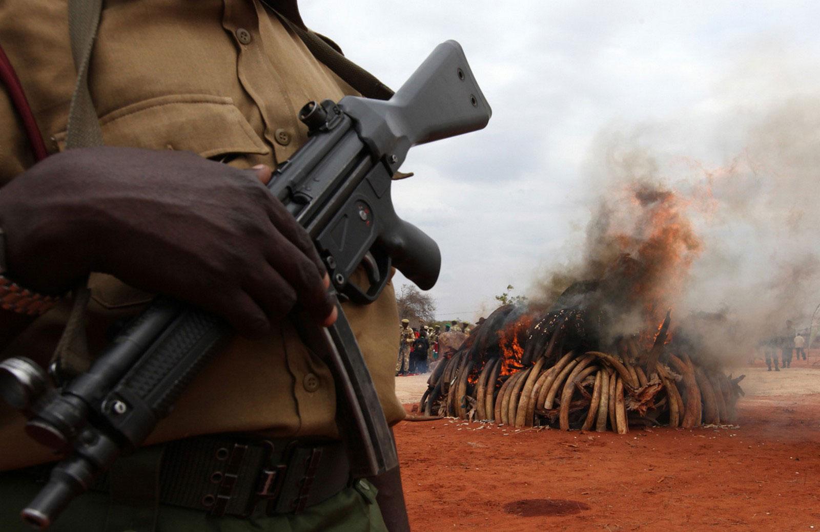 горение слоновой кости