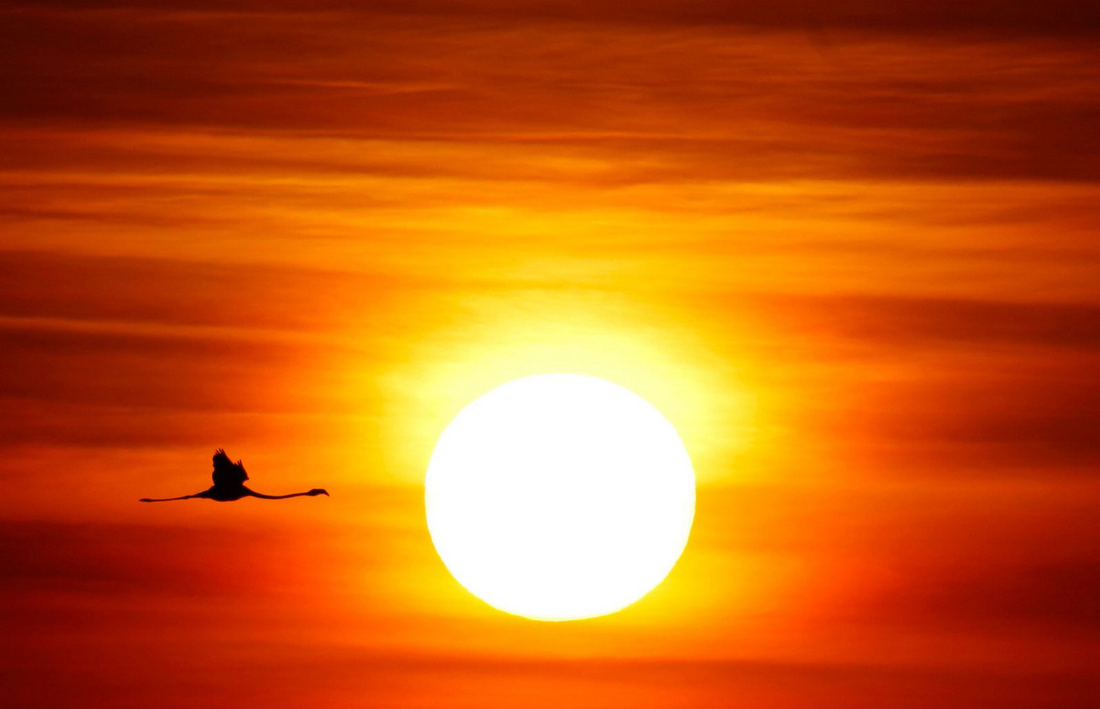 фламинго пролетает над природным заповедником