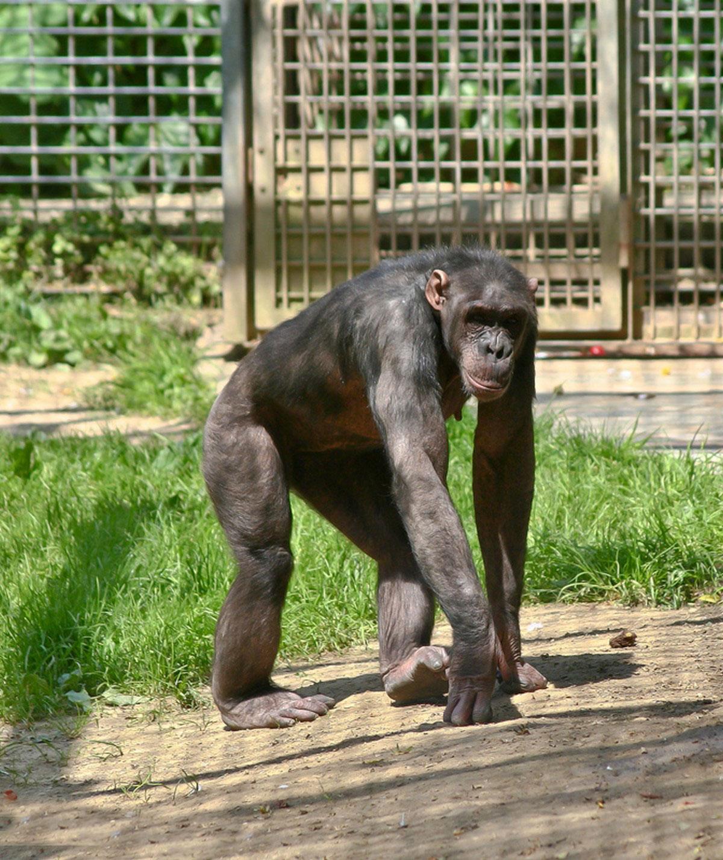 фото обезьяны