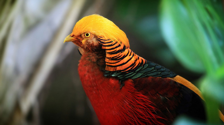 птичка с ярким оперением