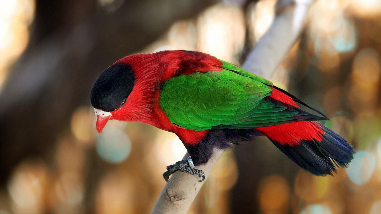 красивая птичка