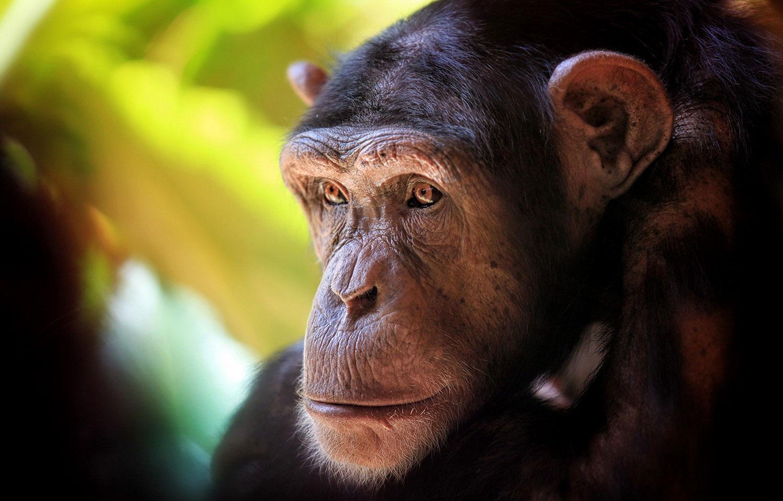 обезьяна, фотография