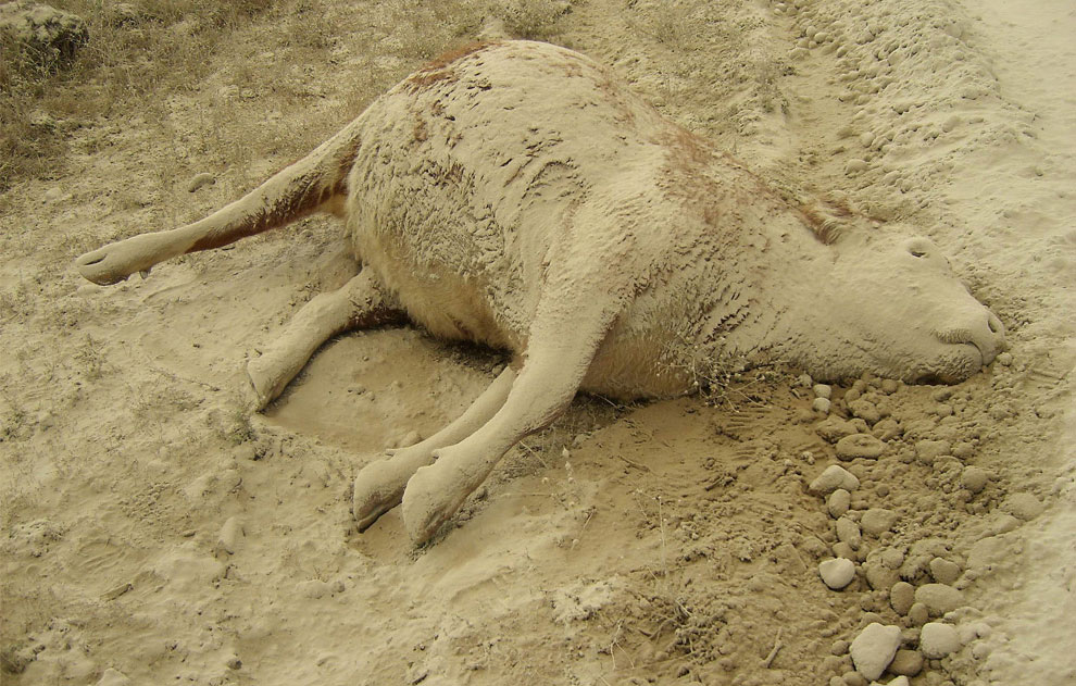 Мертвая корова