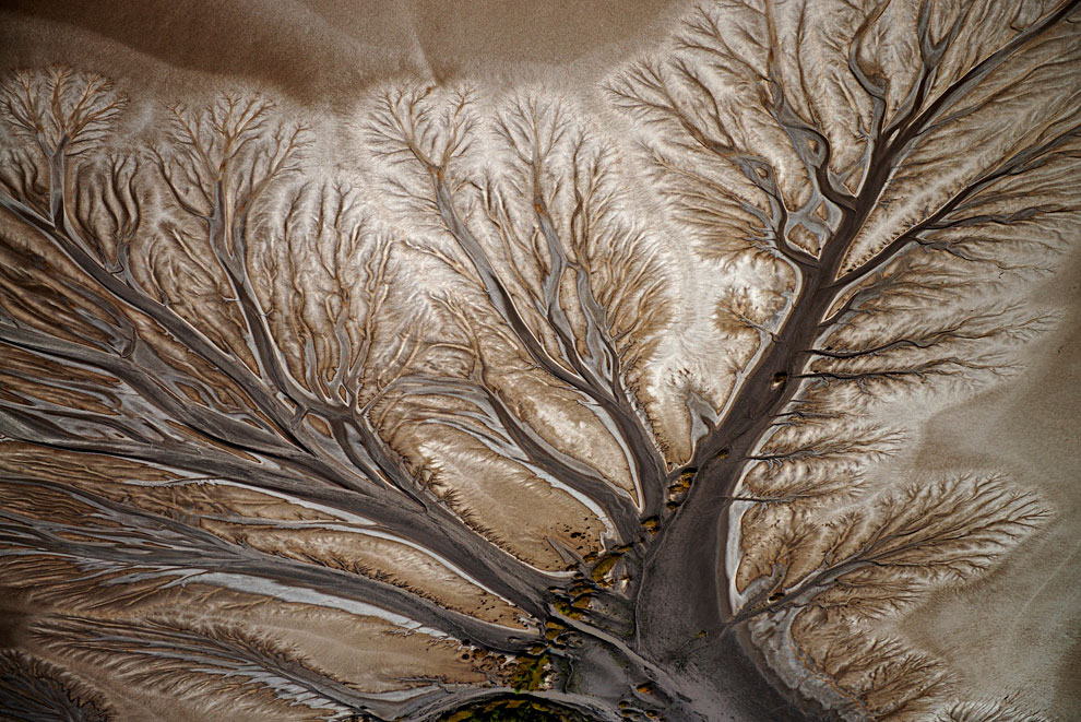 высохшее дерево, фото