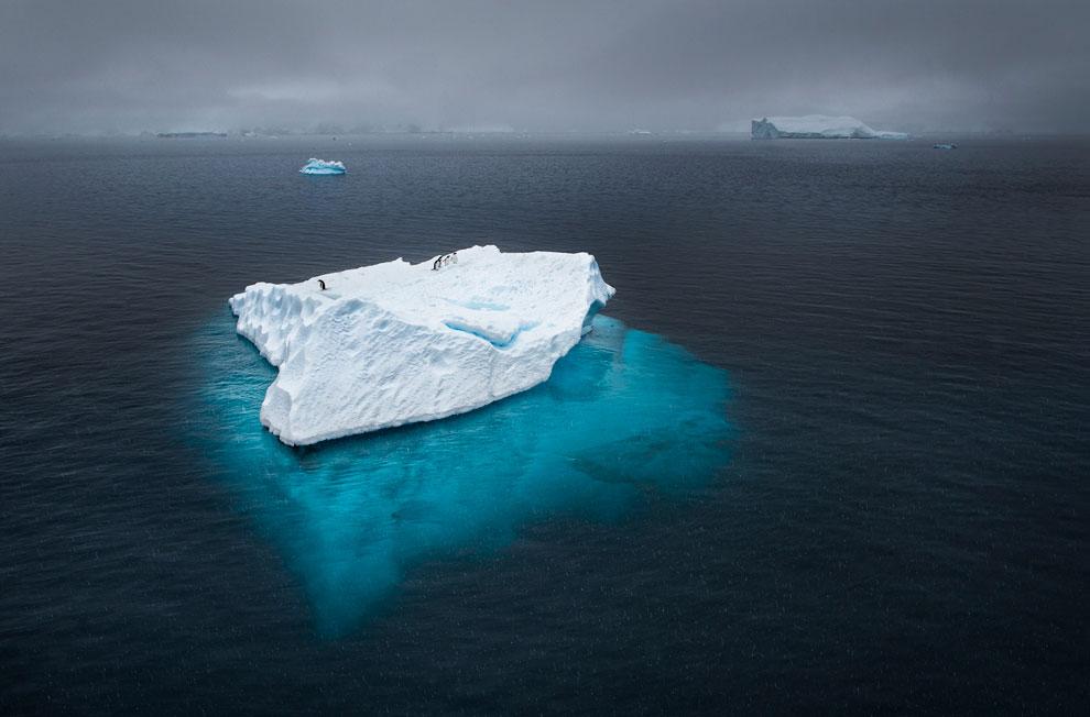 Пингвины на айсберге, фото