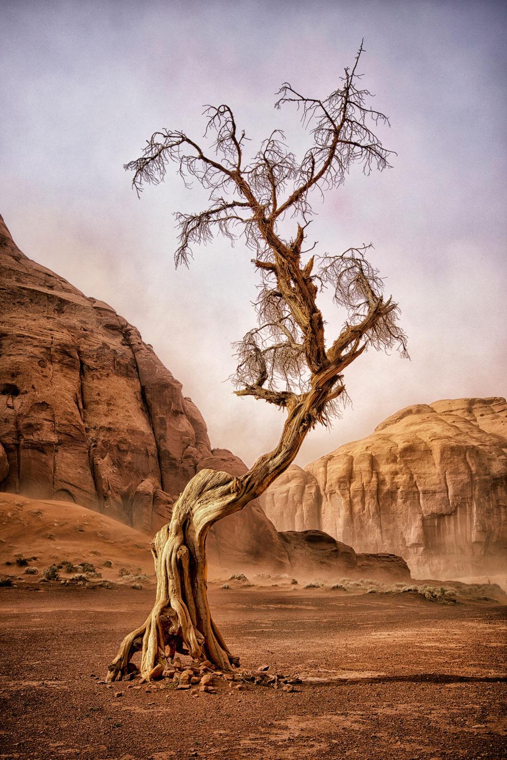 можжевельник в штате Аризона, фото