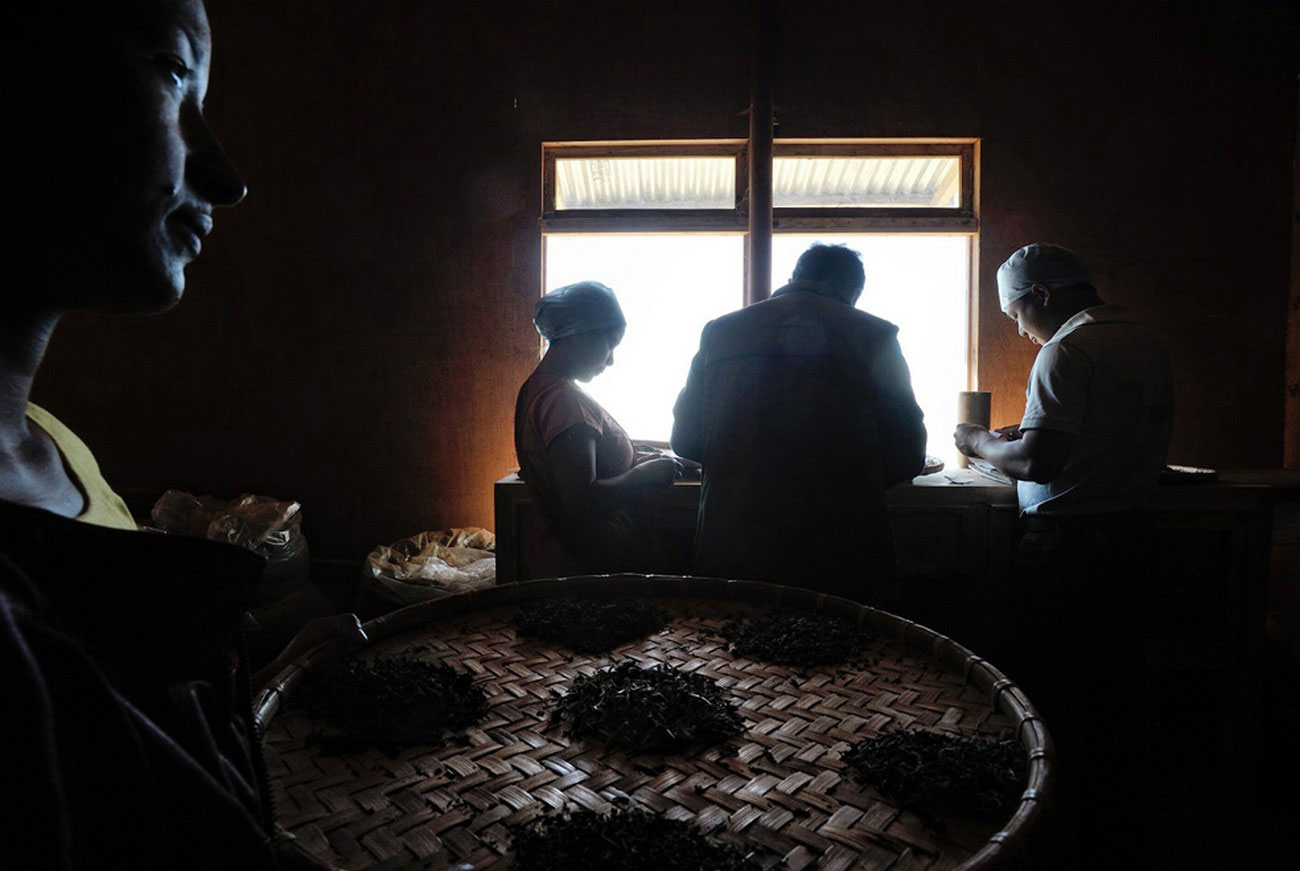 фото на чайной фабрике