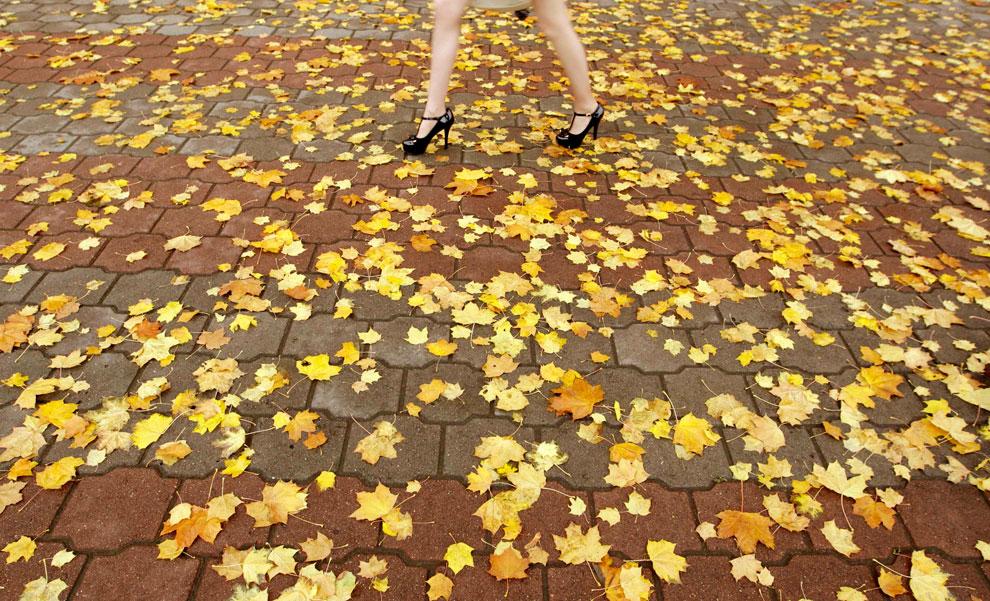 осенние листья, фото